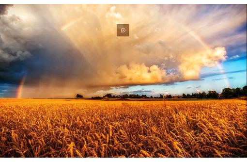 земля сельхозназначения продам, фото — «Реклама Тихорецка»