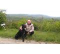 ПРОДАМ  щенки  КАНЕ-КОРСО - Собаки в Кубани