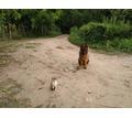 Дрессировка собак всех пород постановка на охрану - Дрессировка, передержка в Туапсе