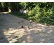 Воспитание, дрессировка собак,курс послушания для щенков с 3 месяцев, фото — «Реклама Тимашевска»