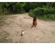 Корректировка поведения у взрослых собак, начальный курс дрессировки для щенков с 3 месяцев, фото — «Реклама Усть-Лабинска»