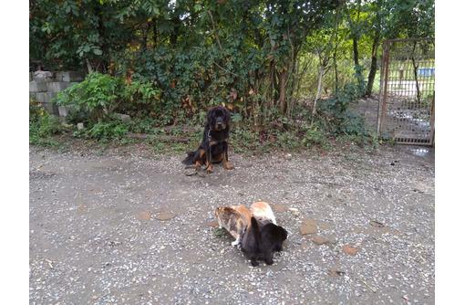 Воспитание обучение дрессировка собак, фото — «Реклама Гулькевичей»