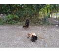 Воспитание обучение дрессировка собак - Дрессировка, передержка в Гулькевичах