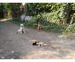 Курс дрессировки для собак всех пород с 3 месяцев., фото — «Реклама Белореченска»