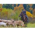 продукты животноводства и прочее - Сельхоз животные в Апшеронске