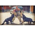 Дрессировка собак Белореченск - Дрессировка, передержка в Кубани