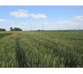 Земельный участок сельхозназначения 6000 Га - Участки в Кубани