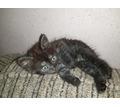 Котята в добрые руки  срочно - Отдам в добрые руки в Кубани