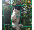 ПРОПАЛ КОТ ВИНСЕНТ - Кошки в Кубани