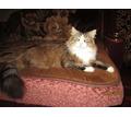 Внимание,поиск - Кошки в Армавире
