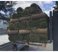 Рулонные газоны Сочи. Красиво и удобно - Саженцы, растения в Кубани