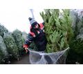 Требуются охранники и реализаторы на торговлю елками на месяц декабрь - Охрана, безопасность в Краснодаре