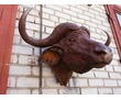 "скульптура креативная""Голова буйвола"", фото — «Реклама Белореченска»"