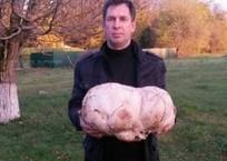 Под Краснодаром мужчина нашел гриб-мутант ФОТО, фото — «Рекламы Кубани»