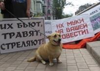 Почему краснодарцы убивают животных?, фото — «Рекламы Приморско-Ахтарска»