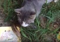 Видео о том, как кубанские котики делятся едой со змеей, покорило соцсети  , фото — «Рекламы Хадыженска»