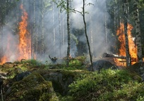 Category_forest_fire_432870_960_720
