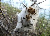 Нашествие гусениц в Сочи попало на видео, фото — «Рекламы Адлера»