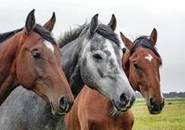 Category_horses_1414889_960_720