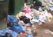 «Здесь толпы крыс шелестят пакетами» - краснодарец на видео пожаловался на санитарное состояние ВИДЕО, фото — «Рекламы Краснодара»