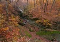 Дедушка с семилетним внуком ушли «по грибы» и пропали в лесах Краснодарского края, фото — «Рекламы Кубани»
