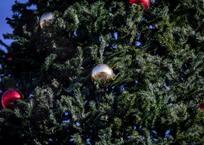 Главная елка Краснодара прибыла в кубанскую столицу из Коломны, фото — «Рекламы Кубани»