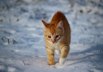 Category_cat_1147266_960_720