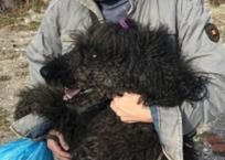 Грустный Хатико из Новороссийска два месяца ждал свою хозяйку ФОТО, фото — «Рекламы Краснодара»