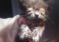 Почти ослепшему котенку нужен корм и лекарства!, фото — «Рекламы Кубани»