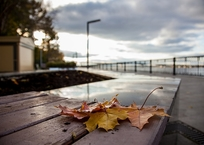 Осень будет продолжаться на Кубани, фото — «Рекламы Кропоткина»