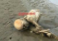 Скальп и верхнюю часть тела обнаружили на берегу реки в Курганинском районе, фото — «Рекламы Гулькевичей»