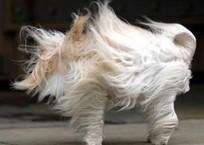 На Кубани действует экстренное предупреждение по ветру, но становится еще теплее, фото — «Рекламы Адлера»