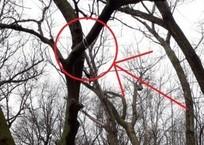 Жителей Новороссийска возмутила петля на дереве возле детской площадки ФОТО, фото — «Рекламы Темрюка»