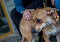 В Геленджике живодера за повешенных щенков наказали исправительными работами, фото — «Рекламы Геленджика»