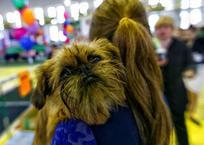 """Друг """"на вес золота"""" – ТОП-5 самых дорогих собак, которых можно купить на Кубани ФОТО, фото — «Рекламы Адлера»"""