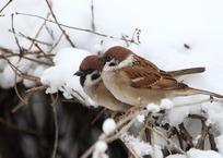 Синоптики: зима все-таки придет на Кубань, фото — «Рекламы Ейска»