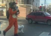 Странный мужчина в костюме тигра с двумя енотами и собакой замечен в Краснодаре, фото — «Рекламы Кореновска»