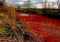 """Река, ставшая """"кровавой"""" в пригороде Краснодара, напугала кубанцев ФОТО, фото — «Рекламы Гулькевичей»"""