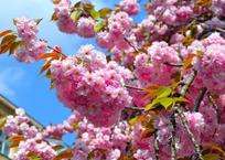 Первая рабочая неделя мая продлится 2 дня, фото — «Рекламы Краснодара»