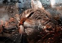 Category_cat_862888_1280