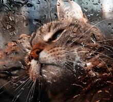 Mini_cat_862888_1280