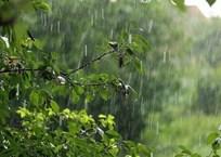 В Краснодарском крае в конце рабочей недели ожидаются дожди и грозы, фото — «Рекламы Приморско-Ахтарска»