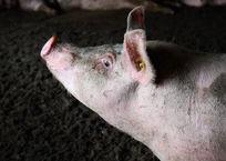 В лесу на Кубани обнаружили останки животных, зараженных африканской чумой свиней, фото — «Рекламы Лабинска»
