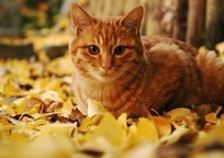 Category_autumn_cat_fall_leaves_favim.com_3085117