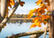 Category_autumn_2902459_960_720