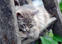 В Краснодаре мужчина выбросил с четвертого этажа кошек своей бывшей жены ВИДЕО, фото — «Рекламы Кубани»