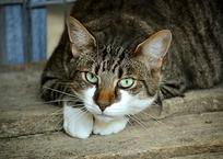 Краснодарский живодер рассказал, зачем выбрасывал кошек с 4 этажа , фото — «Рекламы Кубани»