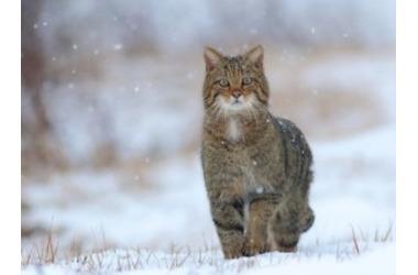 Мокрый снег обрушится на Краснодарский край, фото — «Рекламы Кубани»