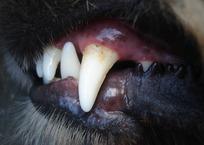 Огромная собака напала на ребенка под Краснодаром ВИДЕО, фото — «Рекламы Новокубанска»
