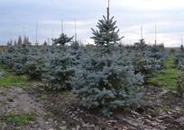 Где утилизировать елку на Кубани, фото — «Рекламы Кропоткина»